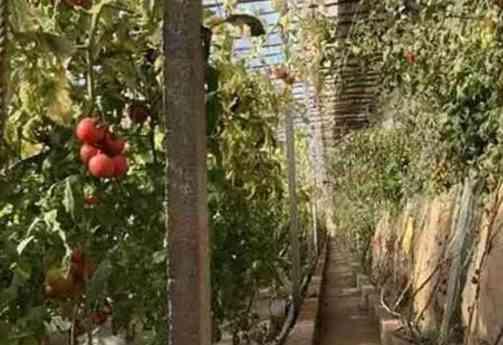 房山人民这样种菜打造智慧农业!