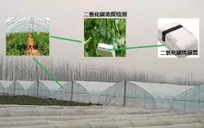 二氧化碳传感器在大棚蔬菜种植中的重要作用