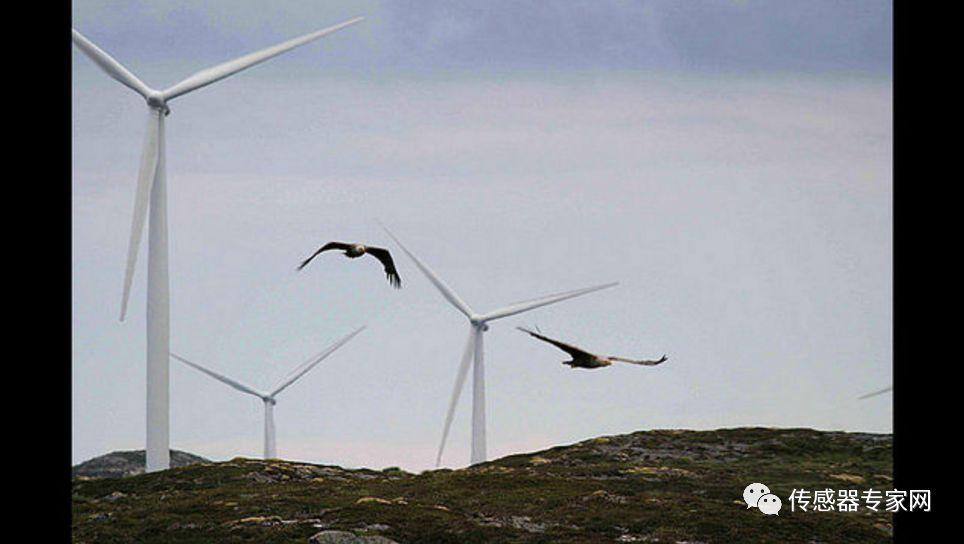 科学家借振动传感器研究风力涡轮机撞鸟检测与规避系统