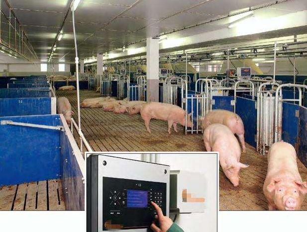 马云和丁磊的养猪模式有什么区别?智能养猪就是智慧农业?