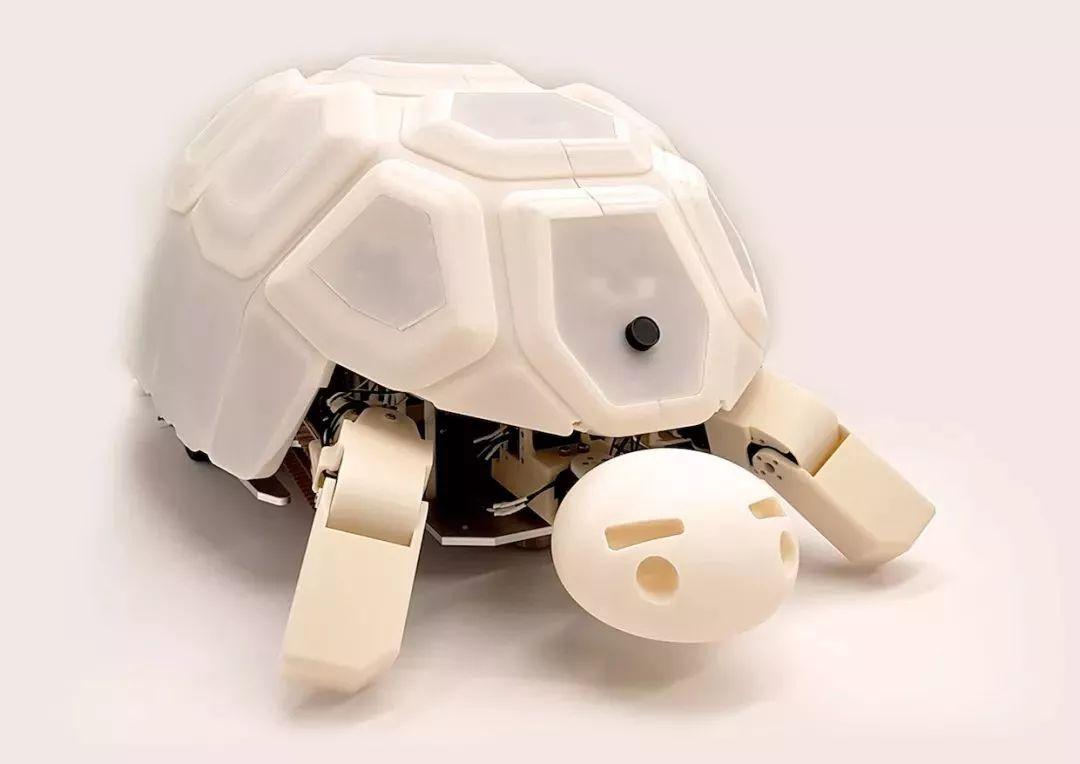智能乌龟shelly
