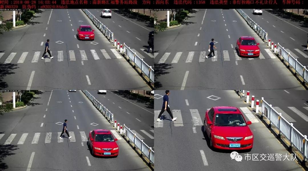 克拉玛依这个路口每天抓拍500起车不礼让斑马线的违法行为