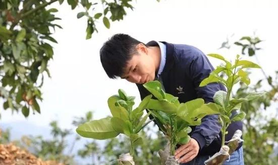 """90后新农人陈贺用#00物联网技术打造""""智慧柚园"""""""