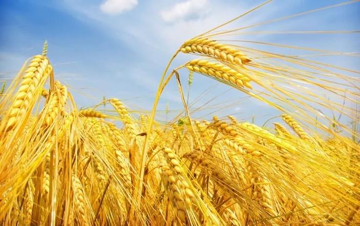 智慧农业:看看泰国农业是怎么发展的!