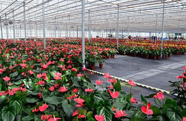 农业物联网整体解决方案:温室花卉的栽培