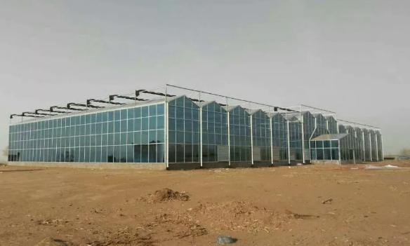 鄂尔多斯智慧农业温室大棚工程建造案例