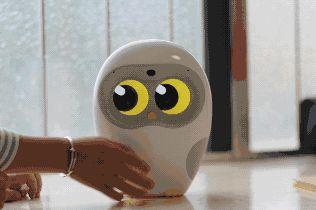 卢卡机器人连不上网络